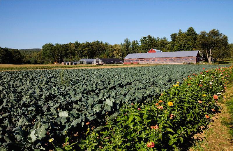 Peck farm 1