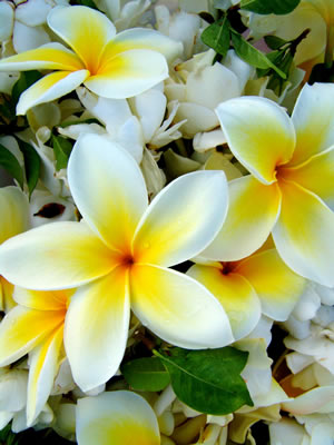 white-flower-assortment.jpg