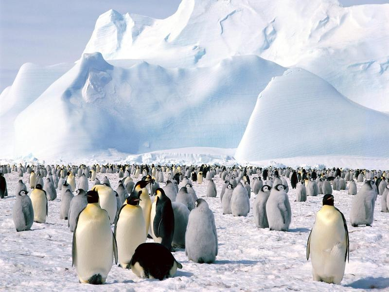 Emperor Penguin Census