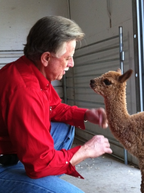 Tommy the 3-day old Alpaca conferring with Tom Aderhold about the fine points of ranching in Keystone