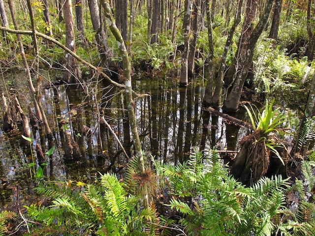 Great Green Swamp