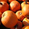 Pumpkins_DrBacchus100x