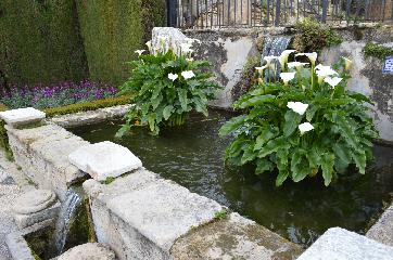flowersgardens