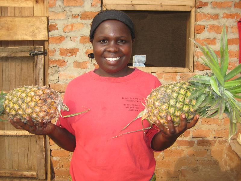 Uganda:  Pineapples