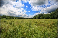 The panoramic landscape at the Great Swamp National Wildlife Refuge. Credit: A. Kaufman, 2011.