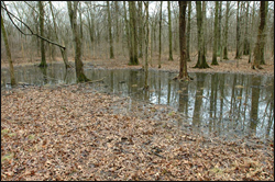 A vernal pool at GSWA's Conservation Management Area (CMA).