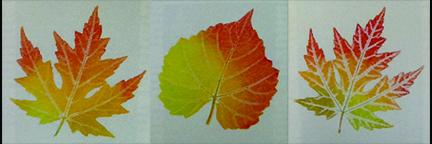 Botanical Hand Printing