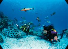 Coral Reef film image