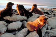 Galapagos images