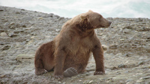 Animalopolis brown bear