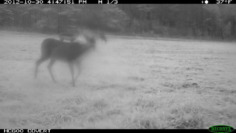 buck 7