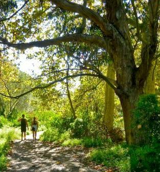 Trail at Temescal Gateway Park