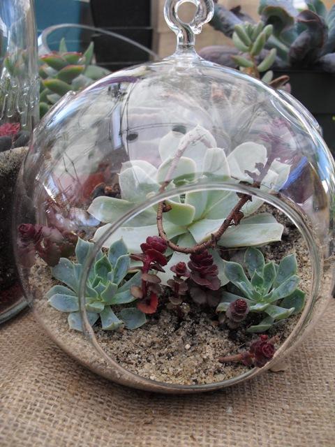 Succulent Terrarium Image