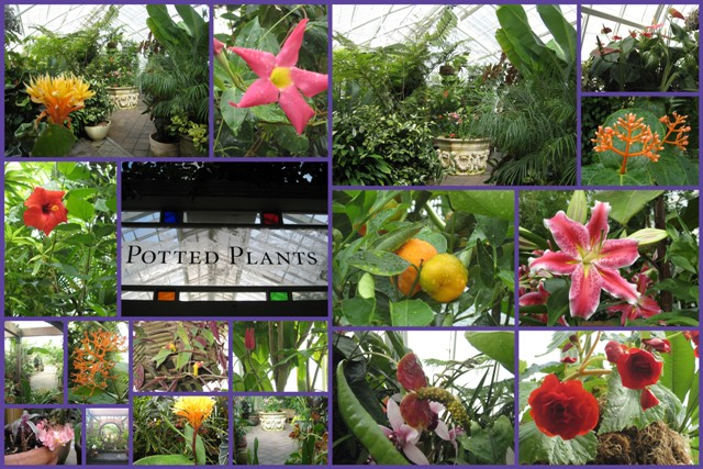 Potted Plants Collage