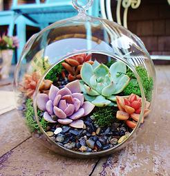 Terrarium Ornament by Brandi Chalker