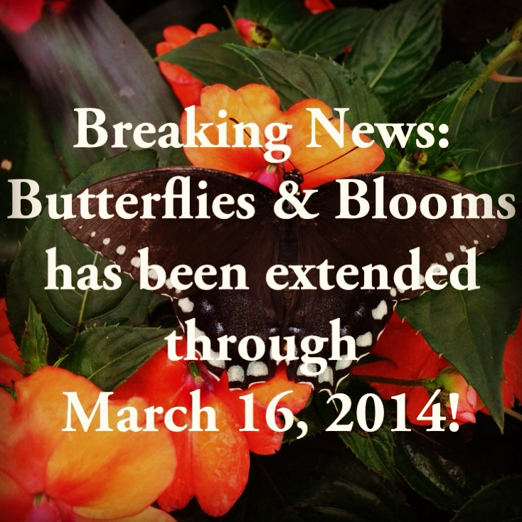 Butterflies & Blooms Extension Announcement