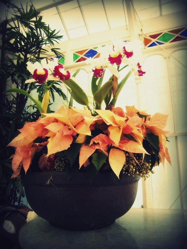 Vestibule Poinsettias