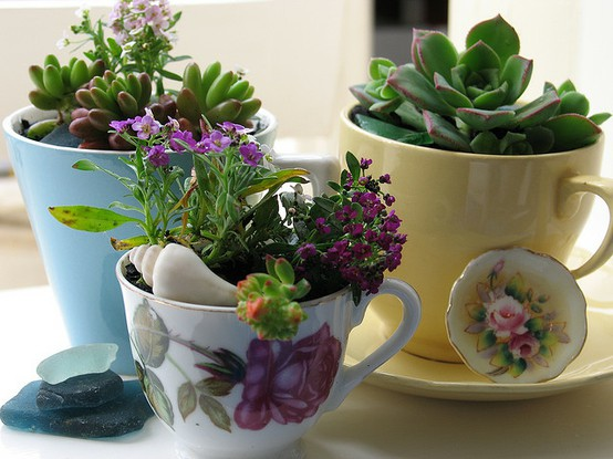 Teacups with succulents