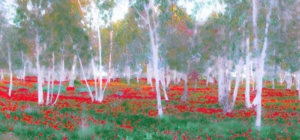 Allen Rokach Image Anmeones Israel