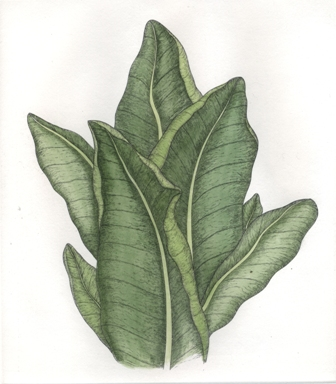 Tobacco Etching by Briony Morrow-Cribbs