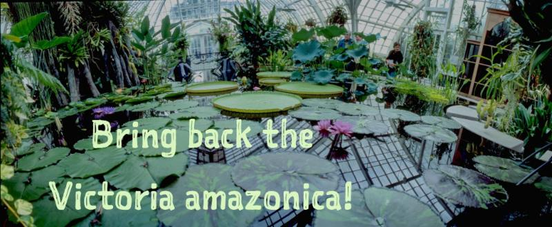 Bring back the V. amazonica