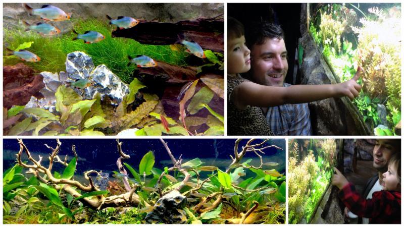 Aquascapes collage