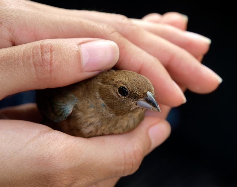 Treating a Bird