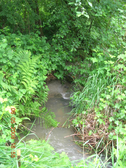 Little Swamp Creek