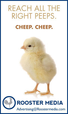 Rooster Media Chick Ad