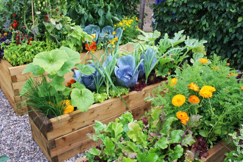 Fresh vegetables and flowering plants in garden during summer