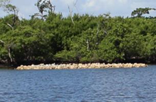 John's Island Oyster Reef