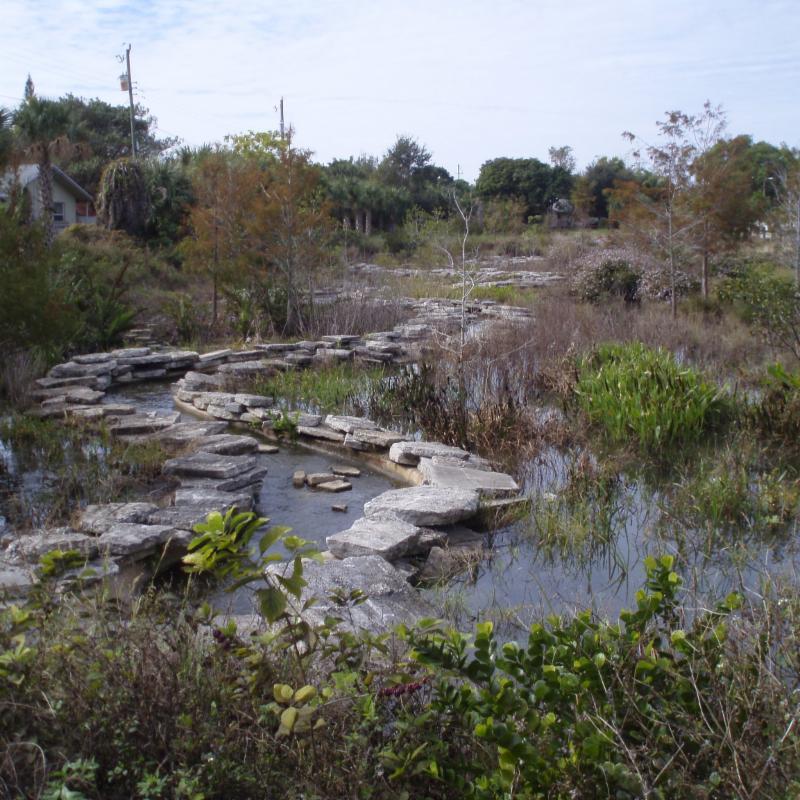 Dennis P. Koehler Preserve brook
