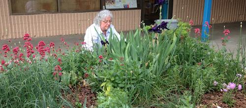 Charlotte gardening