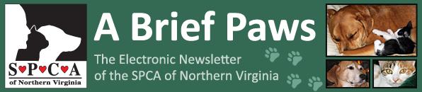 Newsletter header