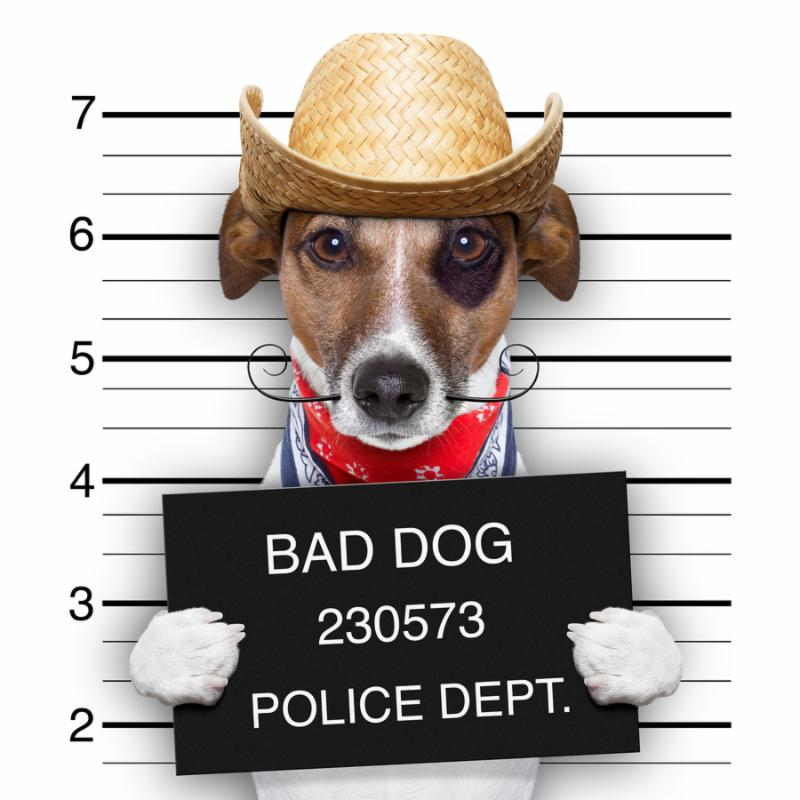 mugshot of a mexican very bad dog
