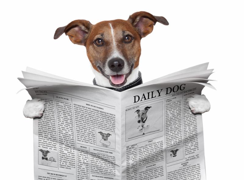 dog reading and holding a big newspaper