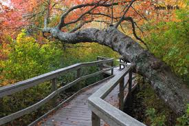 red maple swamp boardwalk