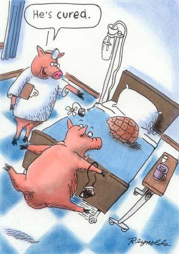 animal cartoons6
