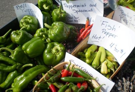 Marsh Meadow Farm - peppers galore!