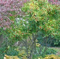 Beautiful fall gardens at Viette's