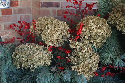 Dried hydrangea flowers with evergreens and winterberry