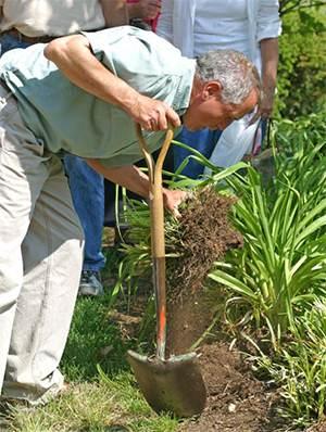 Mark Viette digging Liriope during his propagation seminar.