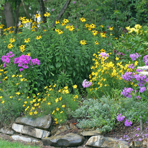 A gorgeous rock wall garden at Viette's blooms all summer with Rudbeckia, tall summer Phlox, and Coreopsis 'Zagreb'.