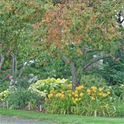 Beautiful fall garden