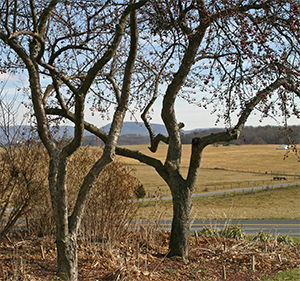 Late winter when the trees are bare it is easy to evaluate your trees.