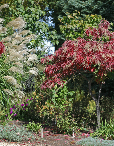 Fall garden colorful sourwood