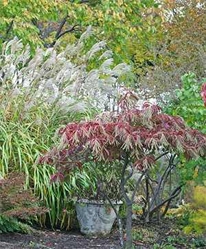 The Viette gardens are full of color in the fall!
