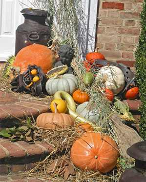 Beautiful fall harvest display on the front porch steps at Viette's