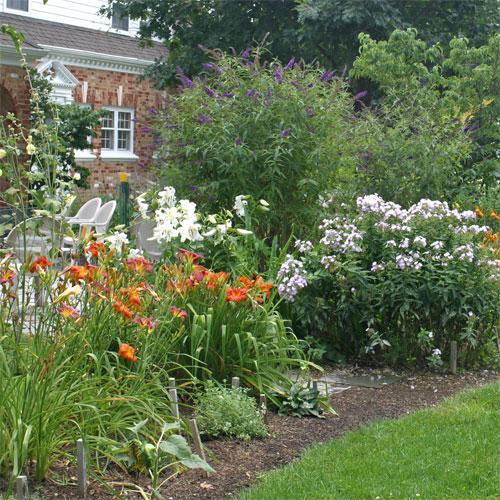 Daylilies brighten a summer perennial garden