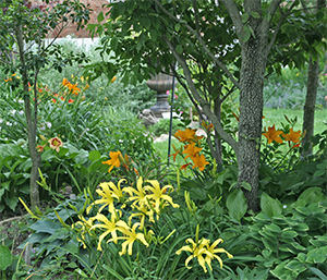 Daylilies can tolerate some shade and will brighten a part shade garden.